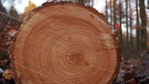 Los científicos usan los anillos de los árboles como 'relojes' para estudiar, entre otras cosas, la cantidad de carbono 14 que se encuentra en cada uno de ellos. Gracias a esto, y debido a que cada anillo representa un año, podemos saber la cantidad de radiación cósmica que nos bombardeaba en cada época de nuestra historia.
